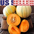 25+ ORGANICALLY GROWN French Charentais Melon Cantaloupe Seeds, Heirloom NON-GMO, Extra Sweet and Fragrant, Super Productive, From USA