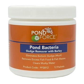 Clean pond bottom sludge