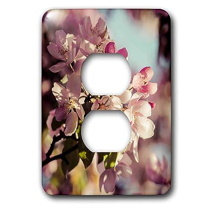 3dRose Alexis Photography - Flowers Crab Apple - Closeup