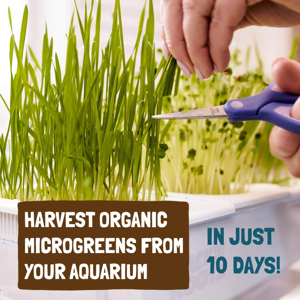 Back to the Roots Self Cleaning Aquaponic Betta Fish Tank Kit for Kids, with STEM Curriculum by Back to the Roots (Image #5)