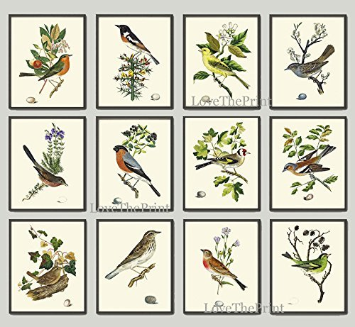 Antique Bird Print Set of 12 Prints Antique Art Beautiful Colored Colorful Natural Science Summer Garden Nature Fruit Berries Tree Branch Leaf Home Room Wall Decor Unframed (Gourmet Settings Frame)