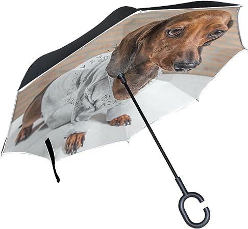ALAZA rojo de perro salchicha perro camisa gris paraguas ...