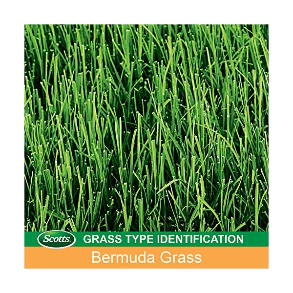 Scotts Turf Builder Bermudagrass Seed - 5LB (Sold in select Southern states)