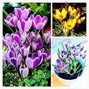 100pcs / bag colores mezclados, semillas de azafrán Bonsai Garden flores de las plantas del jardín de DIY