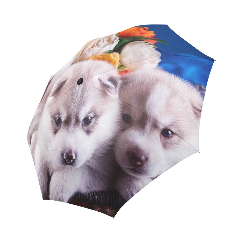 Durable Modeling Funny Husky Puppy Dog Compact Umbrella Automatic