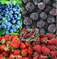 Berry Mix 625 Seeds