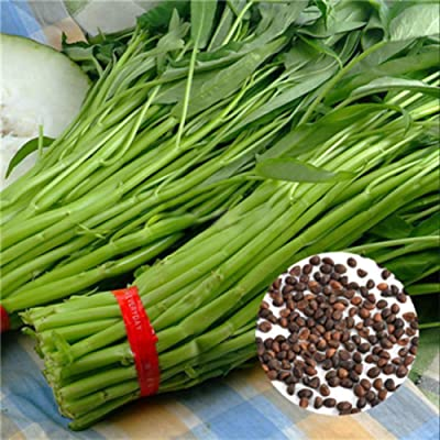 Academyus 500Pcs Water Spinach Seeds Delicious Green Leaf Vegetable Seeds for Yard Gardening Plant 500pcs Water Spinach Seeds : Garden & Outdoor