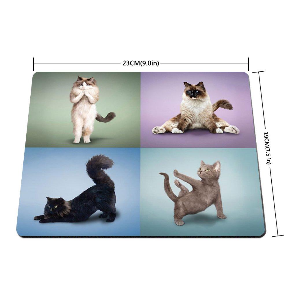 Amazon.com : Funy Professional Yoga Cat do Difficult Yoga ...