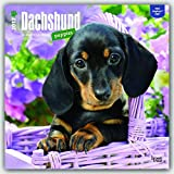 Dachshund Puppies 2017 Square (Multilingual Edition)