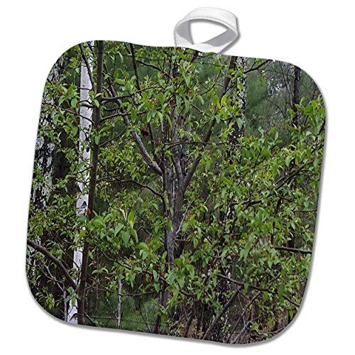 3dRose TDSwhite – Spring Seasonal Nature Photos - Trees First Spring Leaves Woods - 8x8 Potholder (phl_284332_1) by 3dRose (Image #2)