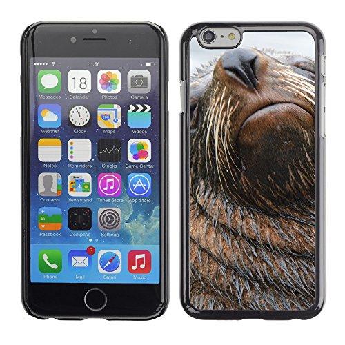 "Premio Sottile Slim Cassa Custodia Case Cover Shell // V00003795 Lion de mer // Apple iPhone 6 6S 6G PLUS 5.5"""