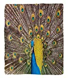 Chaoran 1 Fleece Blanket on Amazon Super Silky Soft All Season Super Plush Peacock Decor Collection Peacock Displaying Feathers Golden Vibrant Colors Eyehaped Picture Print Fabric et Mustard Turquoise