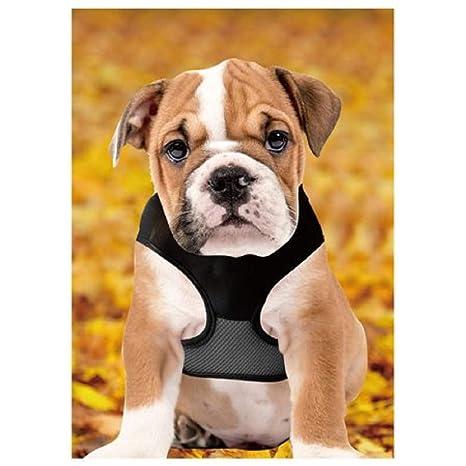 Lucky Leash - Arnés para Perros con colector magnético para ...