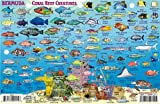 Bermuda Dive Map & Reef Creatures Guide Franko Maps Laminated Fish Card