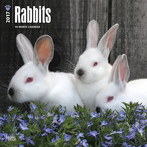 2017-monthly-wall-calendar-rabbits