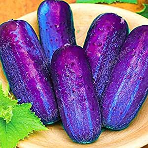 Promotion! 50Pcs Rare Cucumber Seed Courtyard Garden Balcony Potted Bonsai Vegetable Seeds Cucumis Seed Organic Fruit Seeds Cucumber Seeds