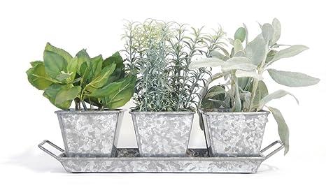 Amazon.com : Garden Planter Herb Kit (Galvanized) - Organic Herb ...