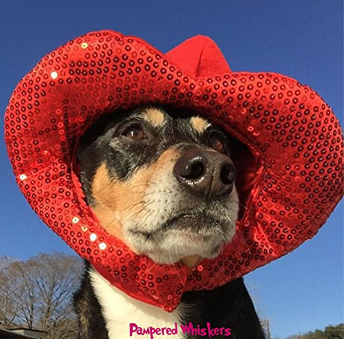 Pampered Whiskers Valentine Hat for Dogs and Cats (Large 16-20