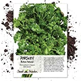 Package of 600 Seeds, Triple Curled Parsley (Petroselinum crispum) Non-GMO Seeds By Seed Needs
