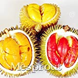 New 5pcs Red Durian Tree Seeds Delicious King Of Fruit Seeds High-nutrition Giant Outdoor Rare Plants Funny Bonsai