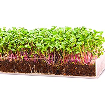 Grow 'n Serve Microgreen Kit – Attractive Acrylic Planter Tray + Soil + Spray Bottle + Seed. Sprout Healthy Delicious Superfood Greens. Great Indoor Garden Gift for Men, Women, Kids, Chef, Foodie.