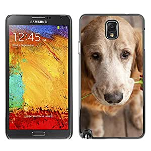 LASTONE PHONE CASE / Slim Protector Hard Shell Cover Case for Samsung Note 3 N9000 N9002 N9005 / Cool Golden Retriever Love Rose