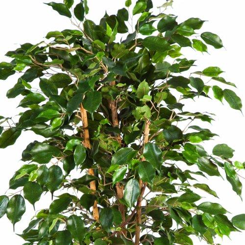 150 cm 880 Feuilles ficus synth/étique//arbuste Artificiel Vert artplants Ficus Exotica Artificiel en Pot
