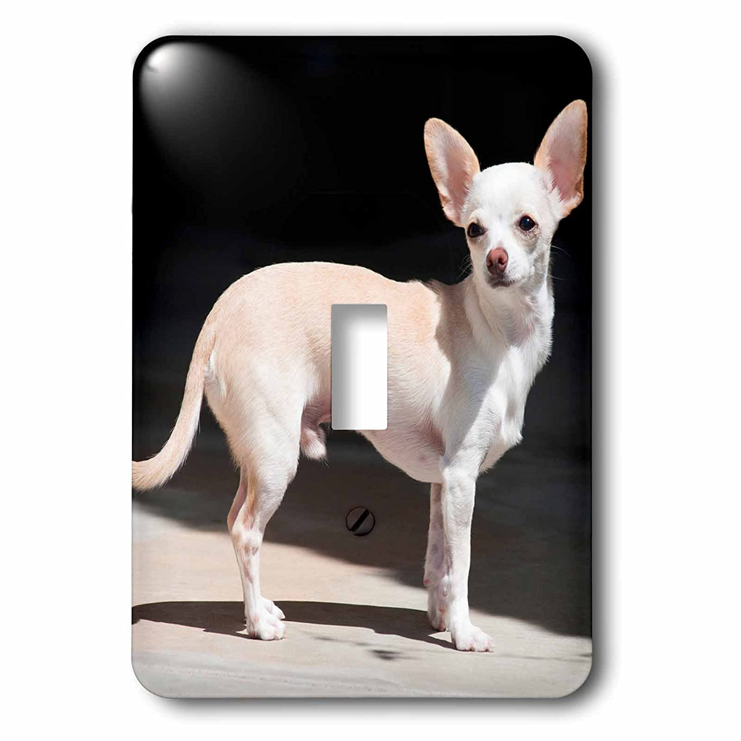 3dRose lsp/_258273/_1 Chihuahua Standing on Sidewalk Toggle Switch Mixed