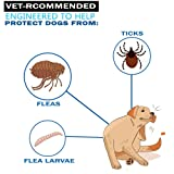 HKCP Products Flea and Tick Prevention Collar for