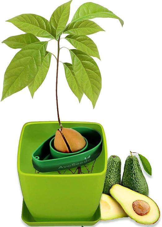 AvoSeedo Kit Jardineria para Aguacate - Gadget Decoracion Casa con ...