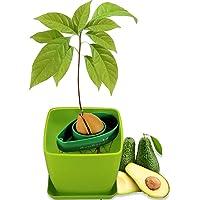 AvoSeedo Kit Jardineriapara Aguacate - Gadget Decoracion Casa