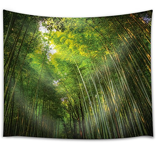 The Sky Illuminating a Bamboo Forest