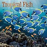 Tropical Fish 2018 Calendar