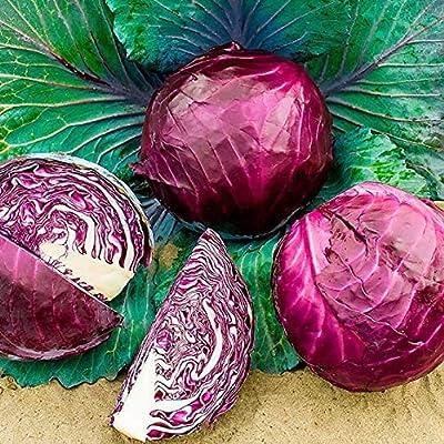 Red Acre Cabbage Seeds, Organic, Non-GMO, Vegetables Seeds for Home Garden : Garden & Outdoor