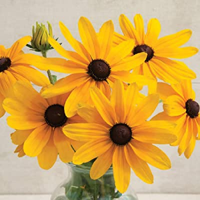 David's Garden Seeds Flower Rudbeckia Indian Summer SL2135 (Yellow) 100 Non-GMO, Heirloom Seeds : Garden & Outdoor
