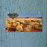 Absorbent Towel Tree Desert Sossusvlei Namibia Southern Africa Photo Marigold Sky Blue and Green Soft Cotton Durable L39.4 x W9.8 inch
