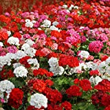 Outsidepride Geranium Flower Seed Plant Mix - 100 Seeds