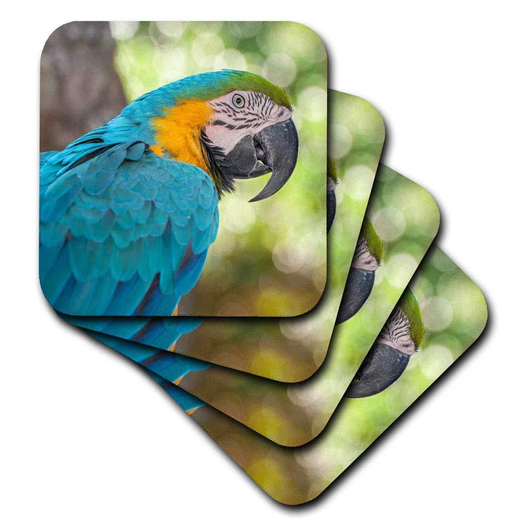 3dRose CST_208295_2 USA, Florida, Orlando, Blue-and-Yellow Macaw, Gatorland. Soft Coasters, (Set of 8)