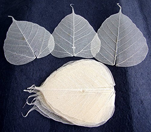 (100 Pcs. Skeleton Natural Ficus Religiosa Leaves Artificial Leaves Craft Card Scrapbook Diy Handmade Embellishment Decoration Art)