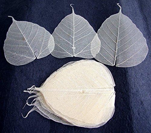 (100 Pcs. Skeleton Natural Ficus Religiosa Leaves Artificial Leaves Craft Card Scrapbook Diy Handmade Embellishment Decoration Art)