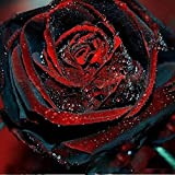 Black Rose Seeds - 100Pcs Black Rose Seeds Flower With Red Edge Rare Rose Garden Bonsai Seeds