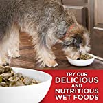 Hill's Science Diet Dry Dog Food, Adult 7+ for Senior Dogs, Small Bites, Chicken Meal, Barley & Brown Rice Recipe 25
