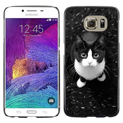 Plastic Shell Protective Case Cover || Samsung Galaxy S6 SM-G920 || Shorthair Housecat Cat @XPTECH