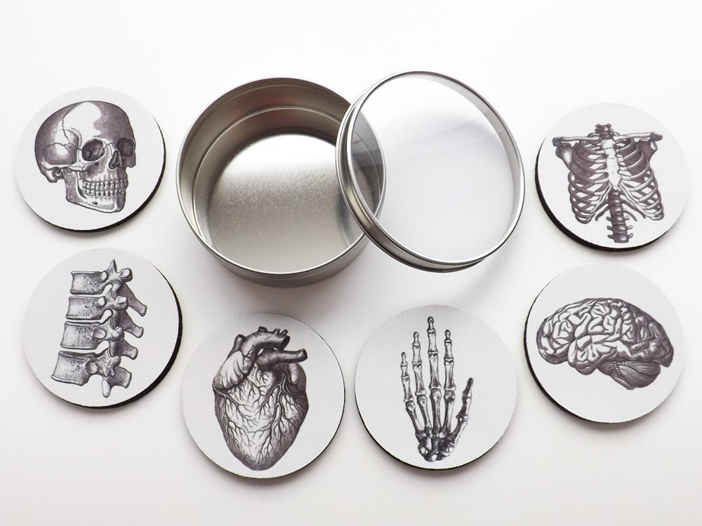 Amazon.com: Anatomy Coasters Gift Set six 3.5 inch brain skull ...