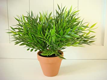 Amazon De Bambus Im Topf Pflanze Bambus Grun Deko Dekoblume Blume