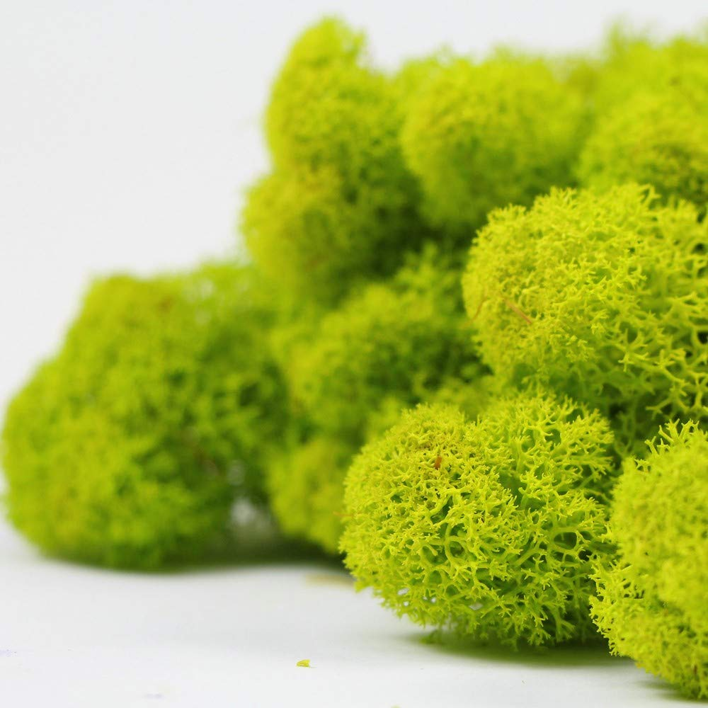 Global footprint 500g per Box stabilized Preserved Reindeer Artificial Green Moss for mall Decoration by Global footprint