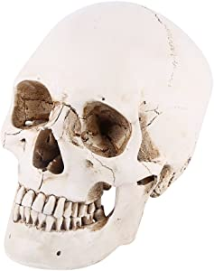 Walfront 1:1 Life Size Model Resin Human Anatomy Head Skull Replica Teaching Tool Halloween Decor White