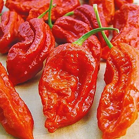 Nature Valley CHILI PEPPER Bhut Jolokia- Naga Jolokia Garden Rare Giant Spices - 50 Seeds