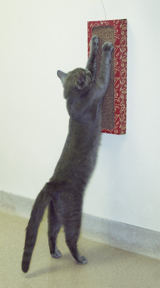 Wall Mounted Scratcher Cat Toy