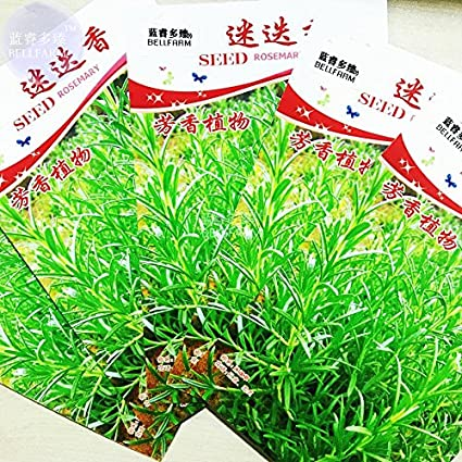Amazon.com : 2018 Hot Sale Ochoos Rosemary Rosmarinus officinalis ...